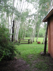 Aspen grove by cabin - Frank Waters Foundation